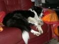 ...April 2008, Regen,Regen nichts als Regen...bei dem Sauwetter kriegt mich heute keiner raus vor die Haustür...