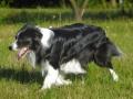 ...Sommer 2008 - Sonne und eine grüne Wiese...