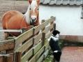 ...und Pferde gibt's im neuen zuhause auch, toll...