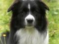 ...Monty ist nun ein Jahr alt...