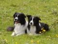 ...Buddy und Monty, zwei Freunde für´s Leben die sich bei uns gefunden haben...