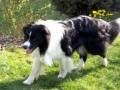 ...April 2008, Monty auf Entdeckungsreise im Garten von Elke und Manfred...