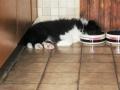 ... im neuen Zuhause, nach dem Fressen bin ich immer so müde...