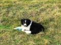 ...und jeden Tag ist spielen mit anderen Hunden angesagt...