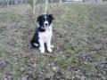 ...Monty ist nun 4 Monate alt...