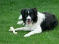 ... aus Monty ist mit seinen nun 7 Monaten ein stattlicher Junghund geworden...