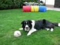 ...der alte Ball ist immer noch am schönsten...
