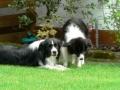 ...Monty und Mo, zwei die sich verstehen...