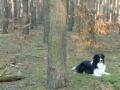 ...inzwischen ist es Winter geworden, auch ohne Schnee und Weihnachten steht vor der Tür. Aber trotzdem geht es jeden Tag raus in den Wald...