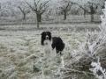 ...Winter 2007/2008, der Frost hat alles fest im Griff, aber Monty stört das wenig...