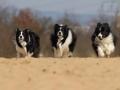 ...und dann nochmal Vollgas... (Buddy, Monty und Nash)