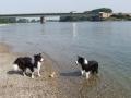 ...Buddy und Nash am Rhein 2012...
