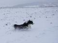 ...und auch der Schnee macht Riesenspaß...