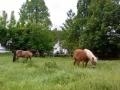 ...es geht doch nichts über saftiges grünes Gras....