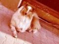 Inka liebte es faul im Hof zu liegen...Sie war der beste Babysitter für unseren Sohn den man sich vorstellen konnte