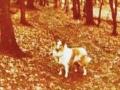 Der Wald war ihre 2. Heimat...