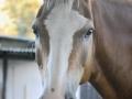 ...er war das Pony von unserem Sohn....
