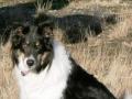 Bingo an seinem 11. Geburtstag - er war einfach ein toller Hund