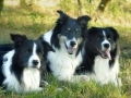 """Bingo im Kreise seiner Freunde, Buddy links und Monty rechts - die """"Drei"""" verstanden sich prächtig."""